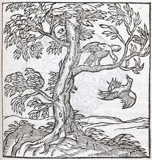 robintree