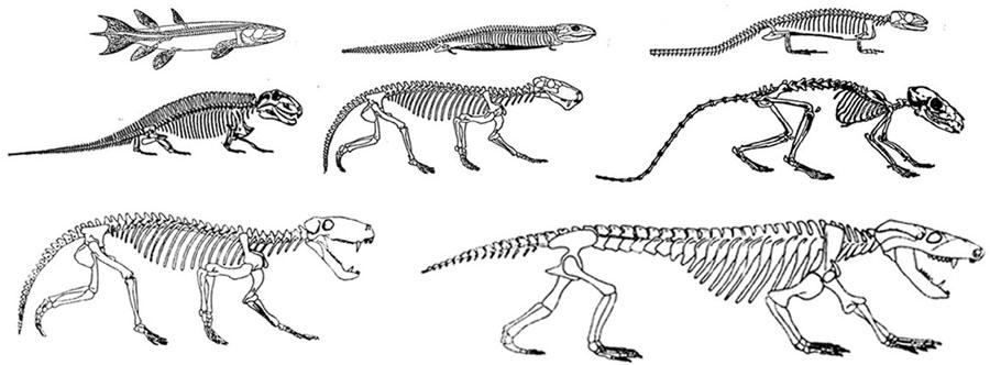 EvolutionFishMammal