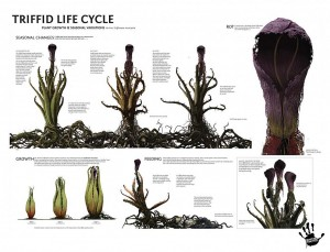 TRIFFID-LIFE-CYCLE-1024x782