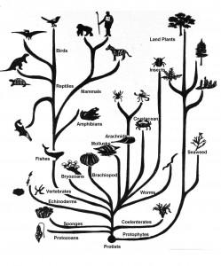 evolution_tree_of_life