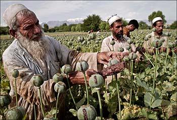 Myanmar Opium