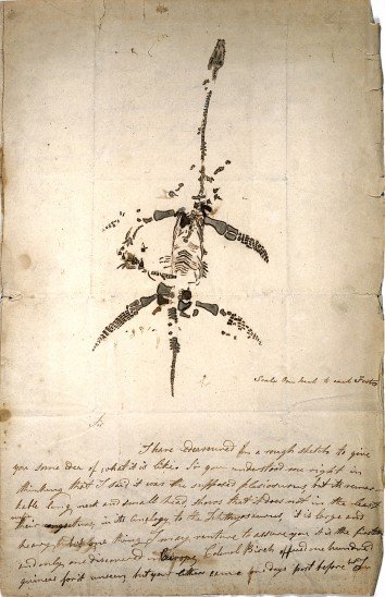 Mary Anning's drawing of her specimen of the first plesiosaur ever found