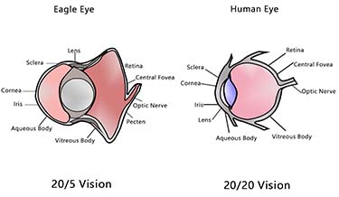human-eye-vs-eagle-eye
